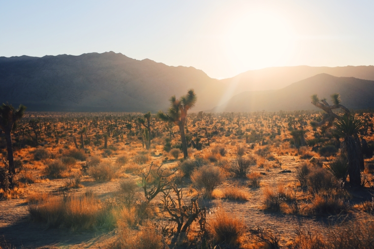 joshua tree national park road trip must see visit