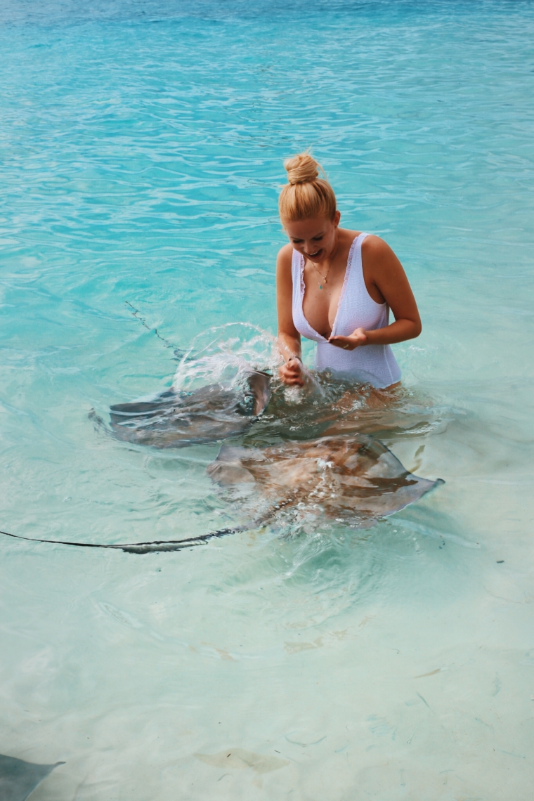 swim swimming with stingrays caribbean bahamas rays chat n chill island exuma