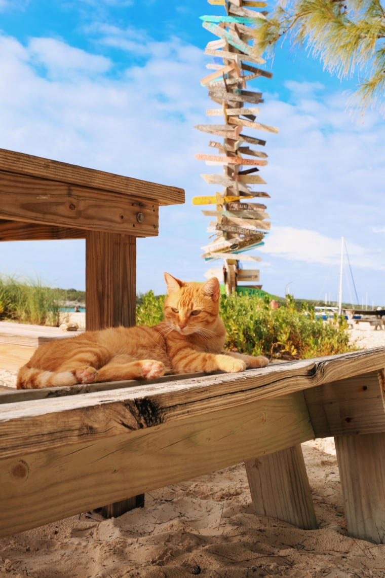 chat n chill stocking island cat bahamas
