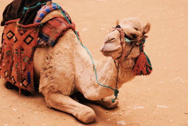 jordan petra camel