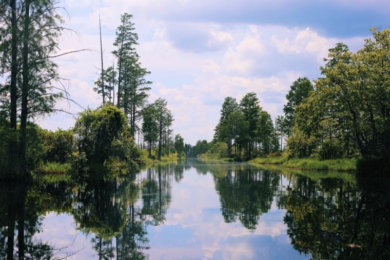 okefenokee swamp park georgia
