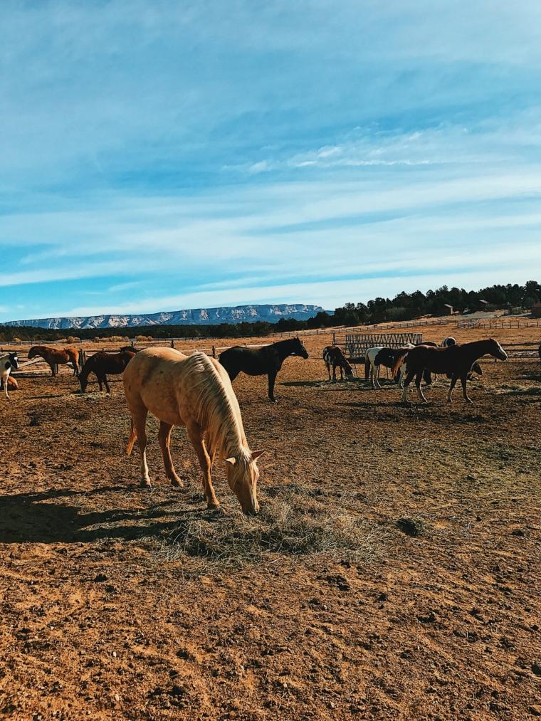 utah road trip horses