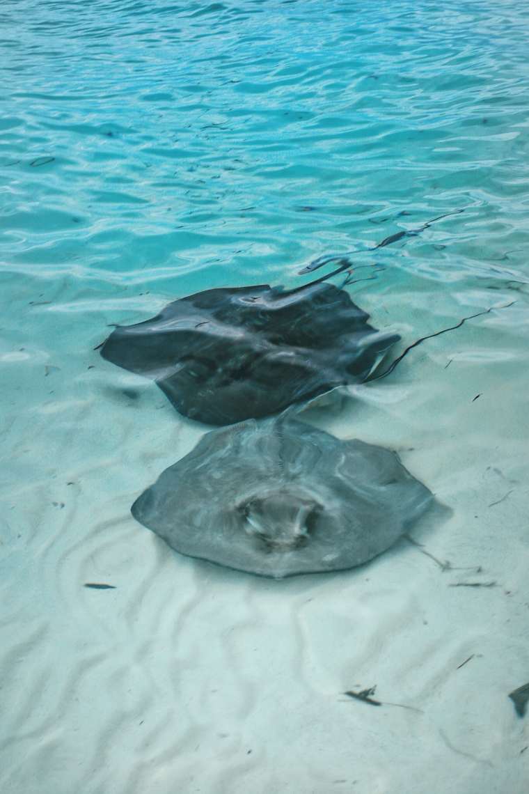swimming with stingrays bahamas exuma caribbean chat n chill must see