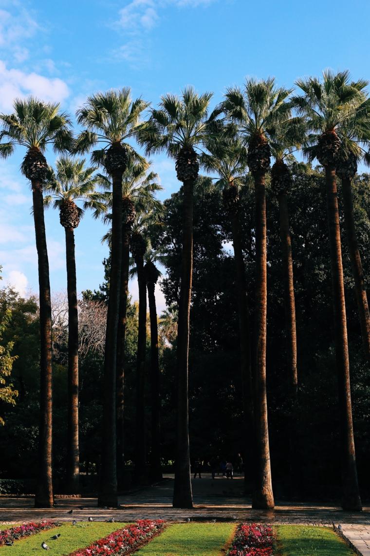 athen palmen