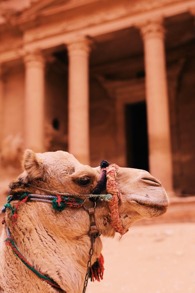 jordanien petra kamel