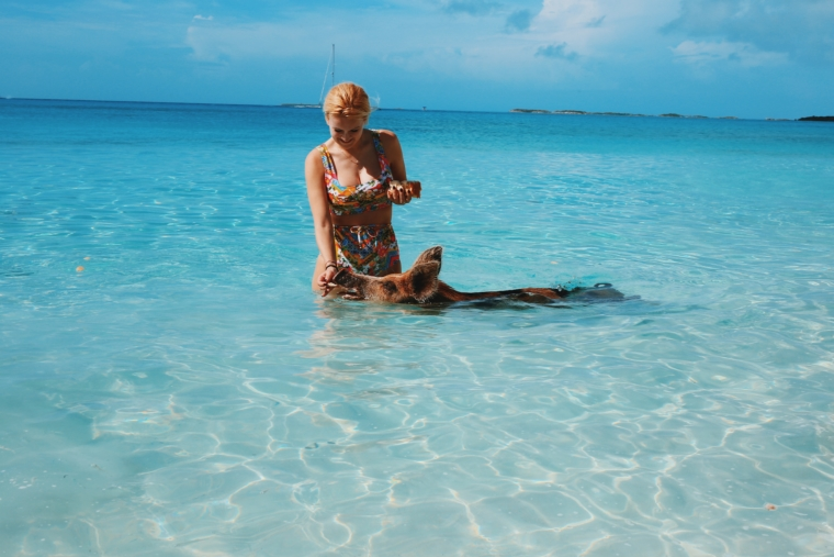 swim with pigs swimming bahamas must do