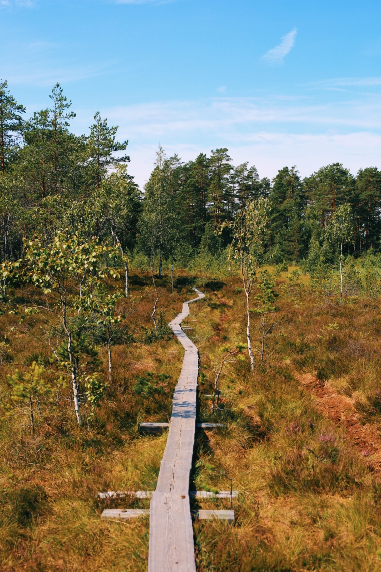 mathildedal finnland forest walk
