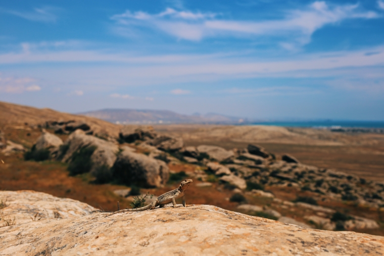 Gobustan National Park Azerbaijan