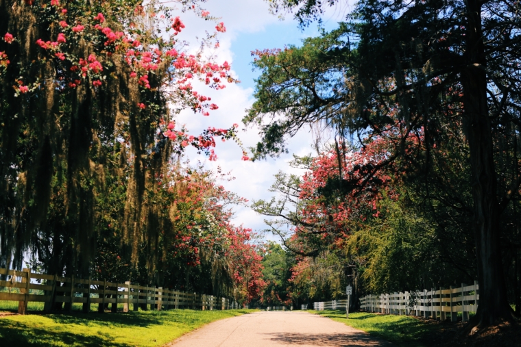 louisiana road