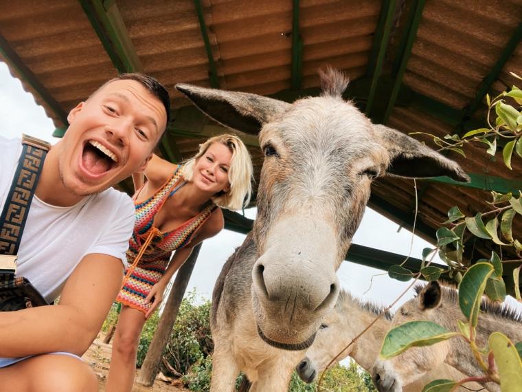 Aruba Donkey Sanctuary