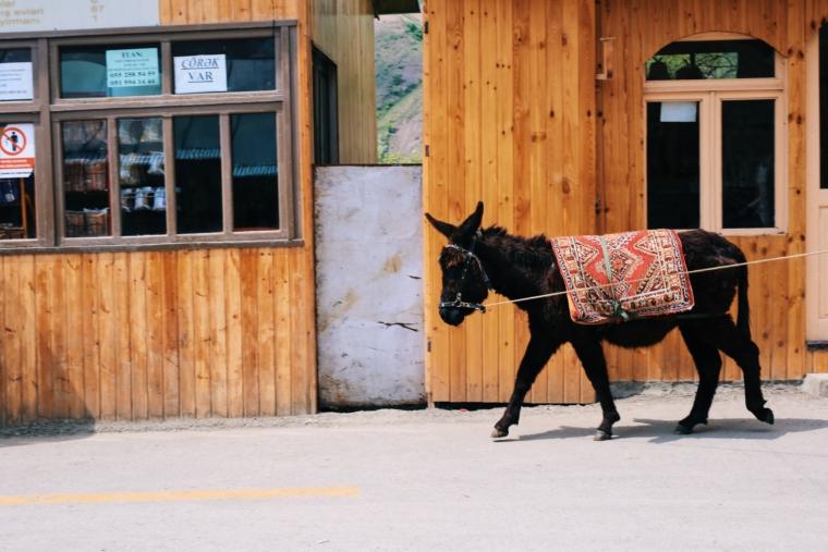 azerbaijan lahij donkey