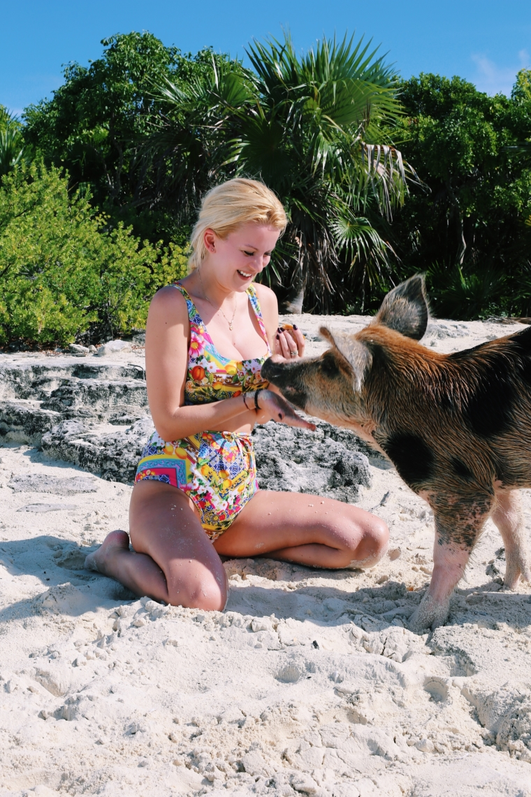 pigs bahamas bucket list must see do