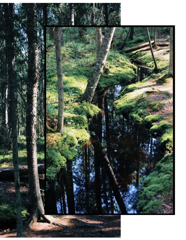 mathildedal finnland forest