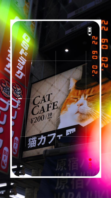 activities japan cat cafe