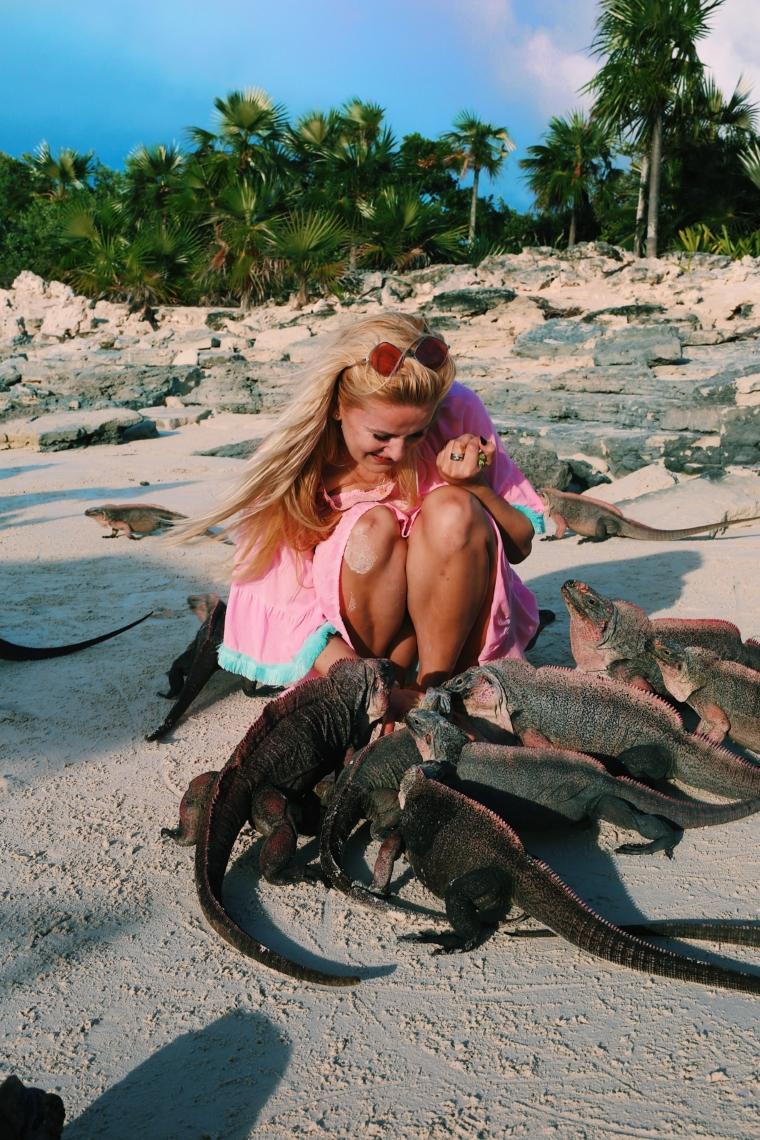 bahamas Iguana Island