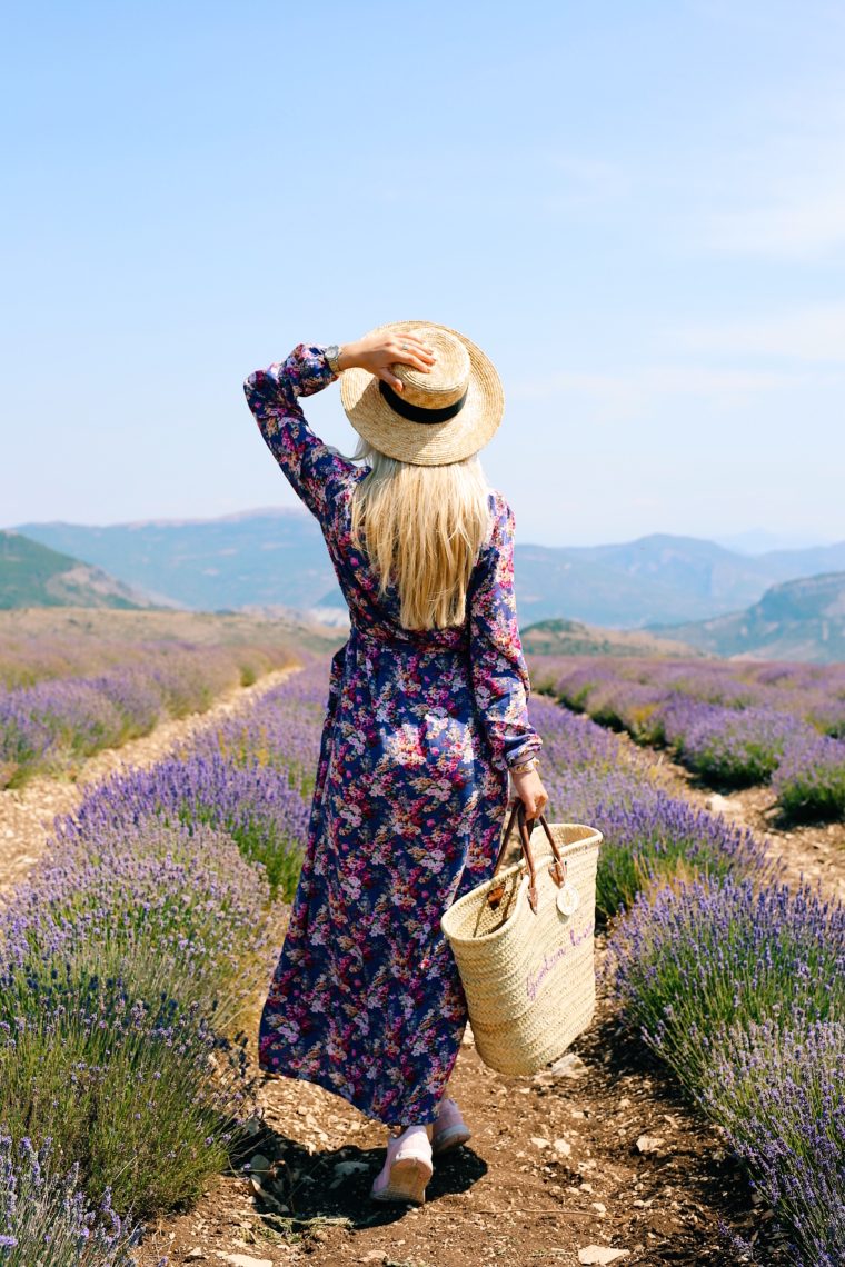 provence lavender fields photo location perfect france