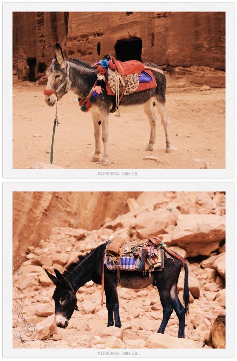 donkey jordan petra