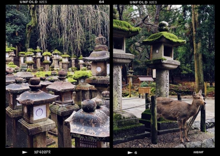 nara japan dear