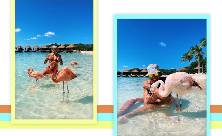 aruba flamingo island beach resort renaissance hotel flamingos