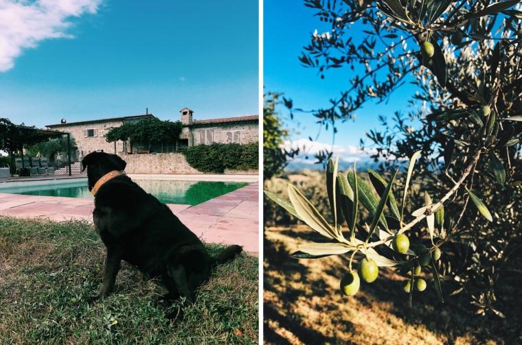 urlaub mit hund italien umbrien