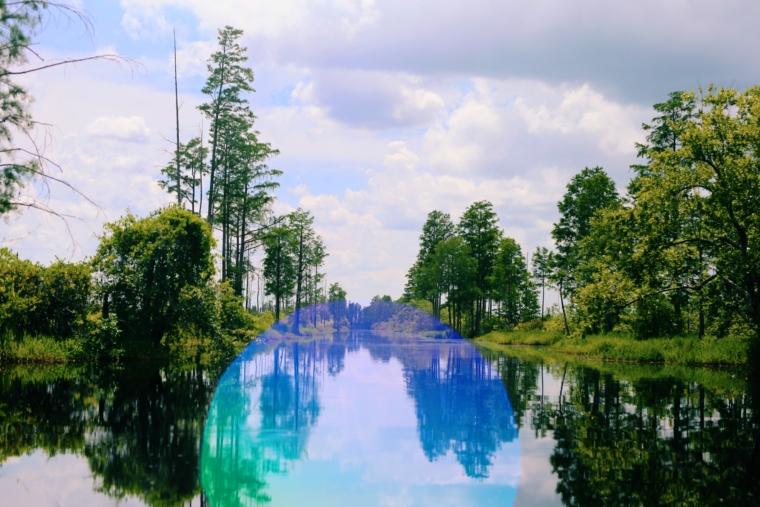 okefenokee swamp park georgia usa