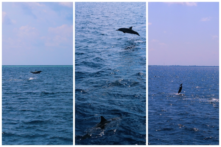 Shangri La's Villingili Resort & Spa Maldives dolphines